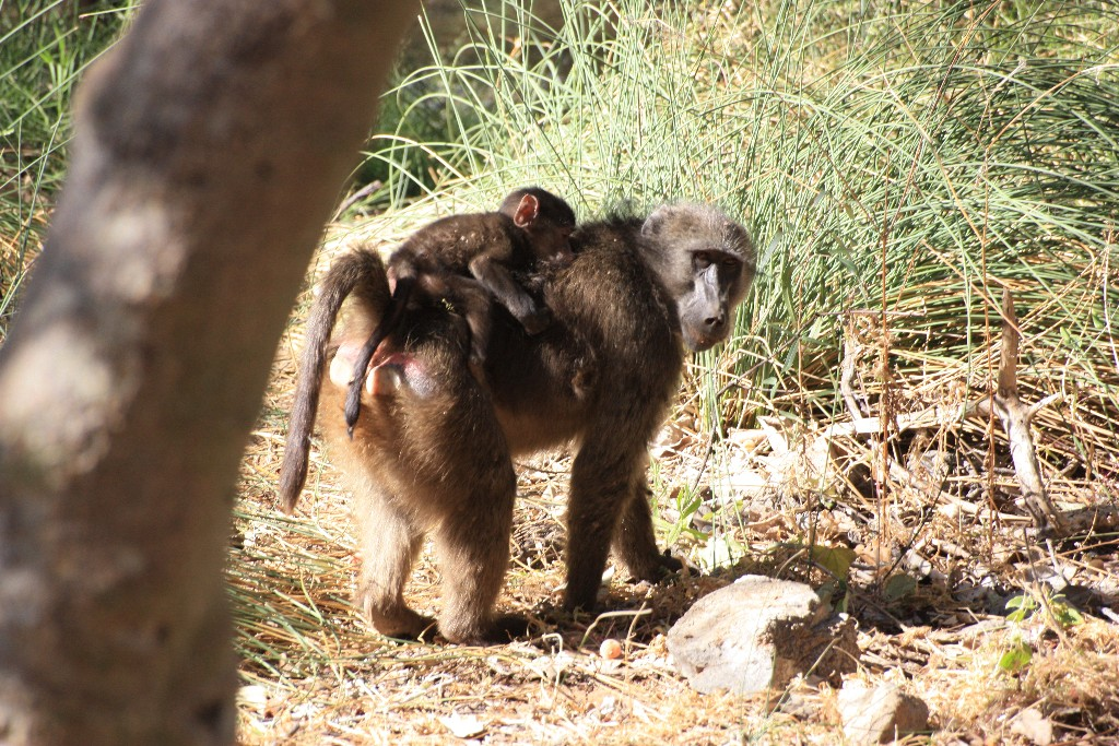 resa till Namibia