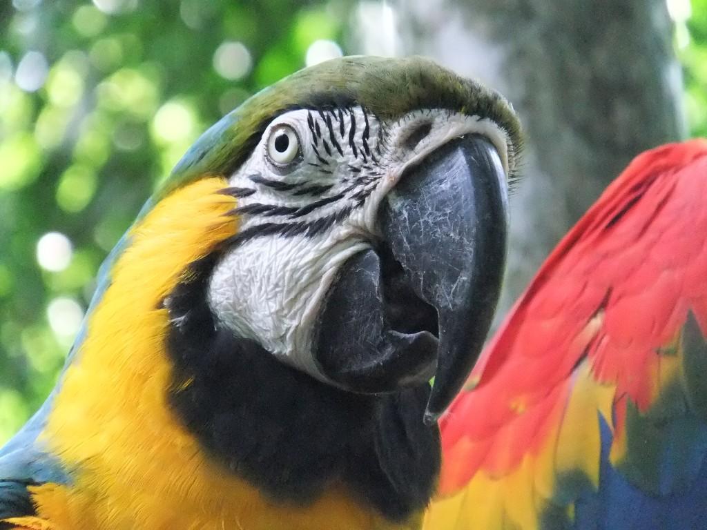 Att kolla in papegojor i Brasilien – en tillbakablick på vår mest udda resa