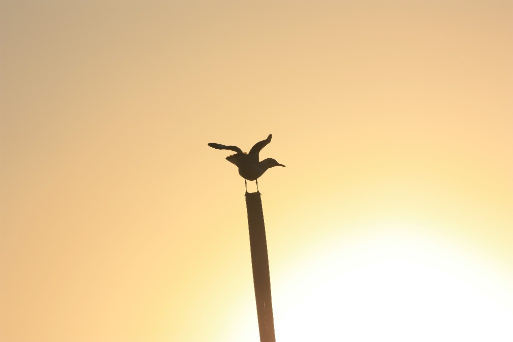 Att flyga inrikes i Burma