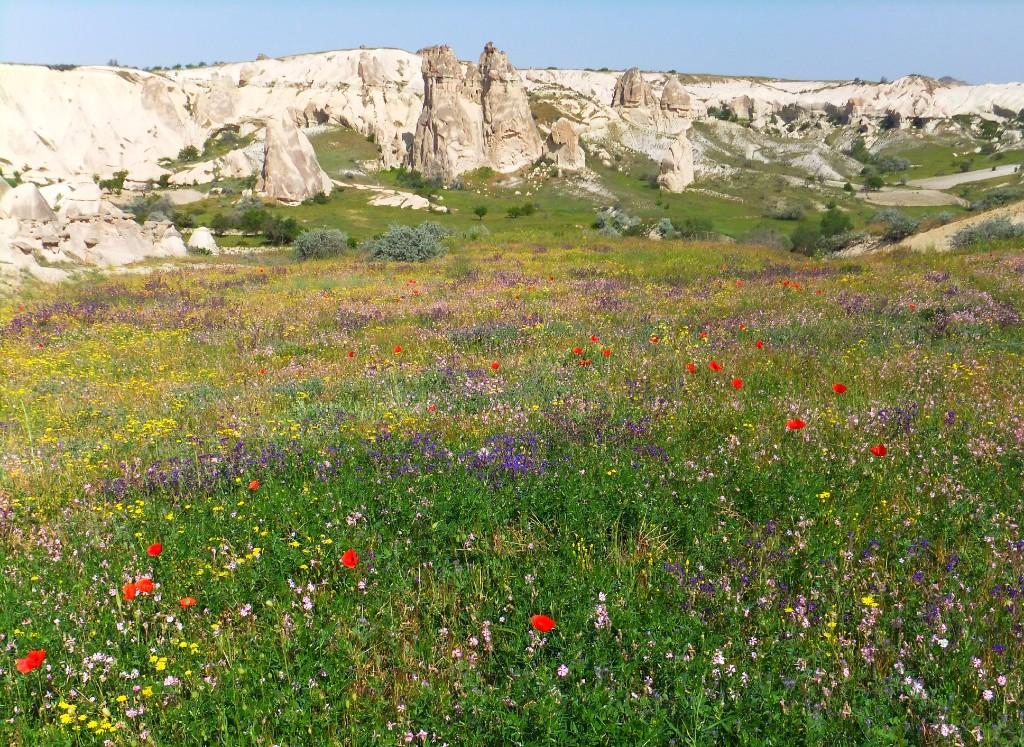 Blomsteräng i Love Valley Vandring i Kappadokien