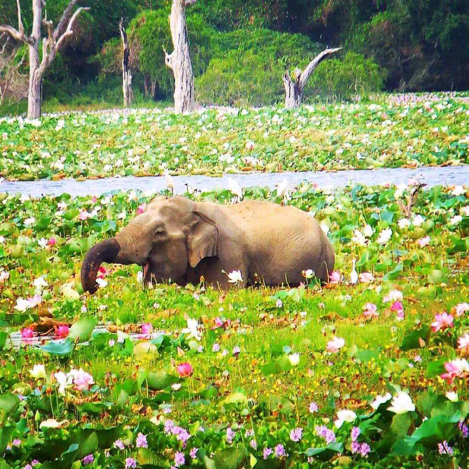 UD har hävt sin avrådan för Sri Lanka – vågar man åka till Sri Lanka nu?