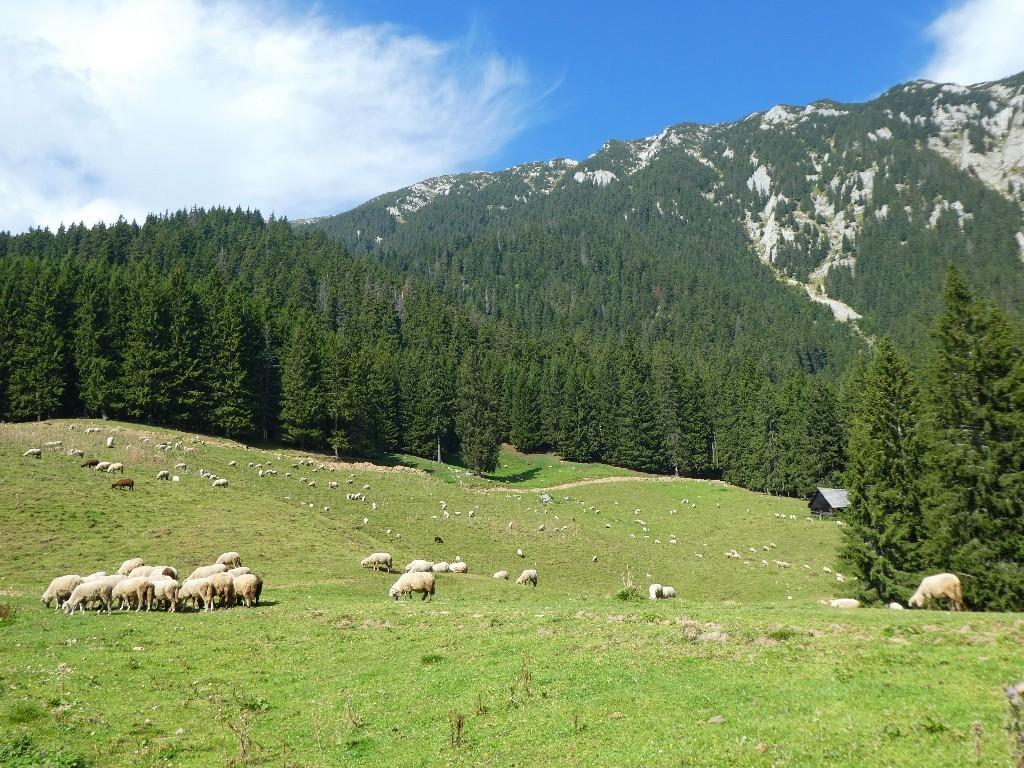 Vandring i Piatra Craiului Transsylvanien