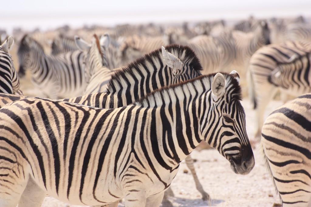 5 riktigt sjuka djurscams som du inte vill stödja på resan