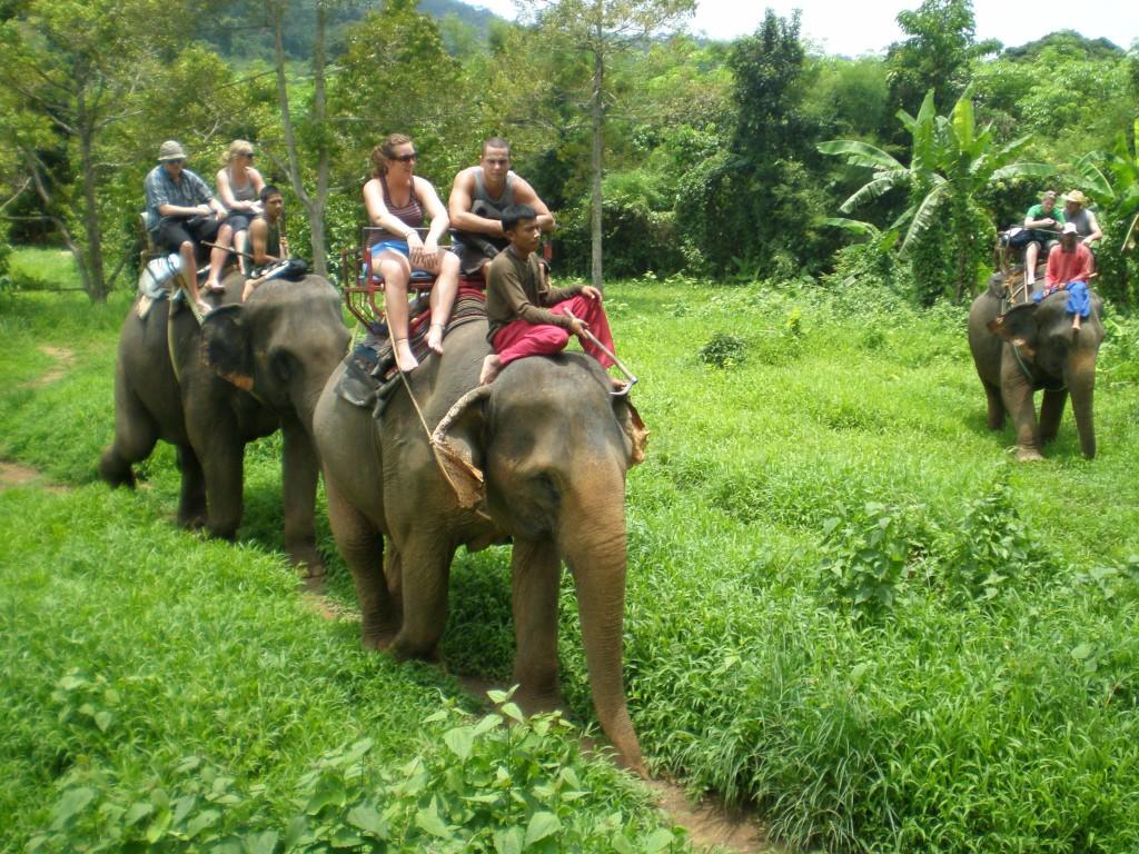 djurscams elefantridning