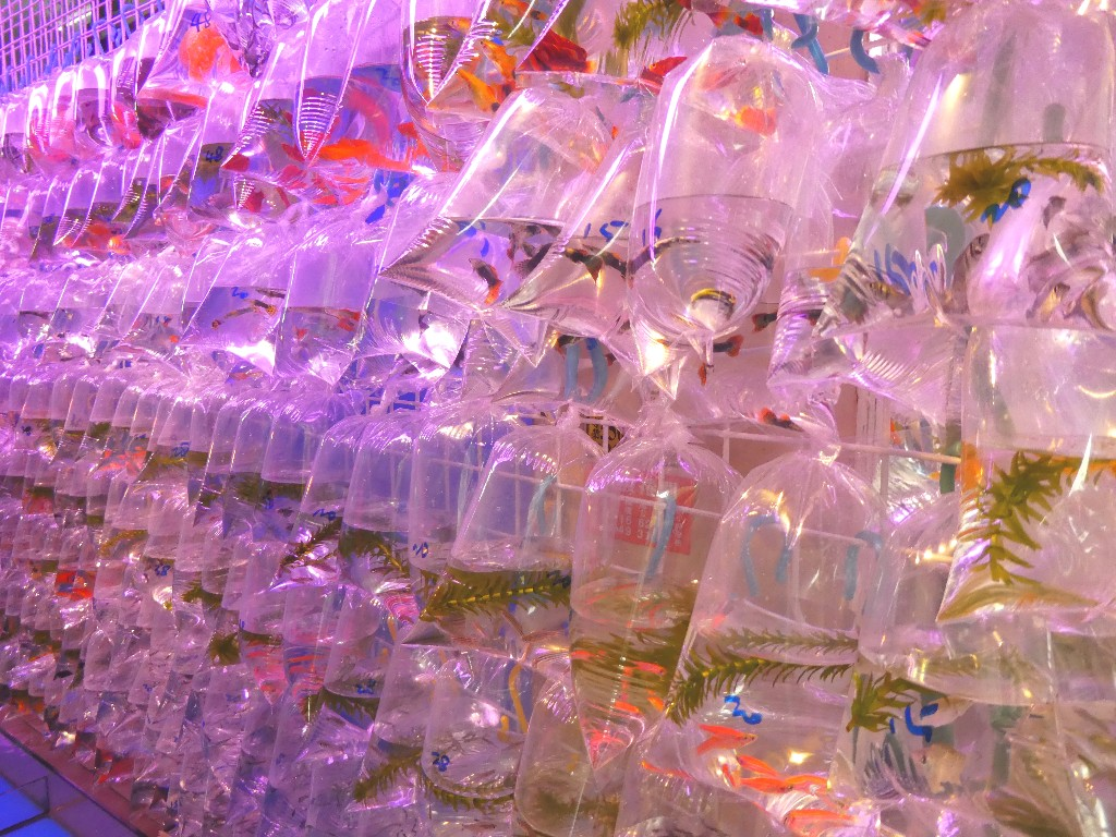 Gold fish market - resa till Hong Kong