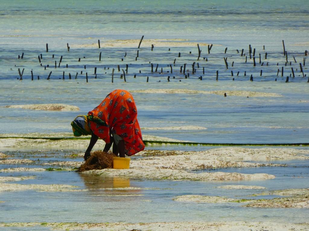 Alltså det här med tidvatten på Zanzibar, hur funkar det egentligen?