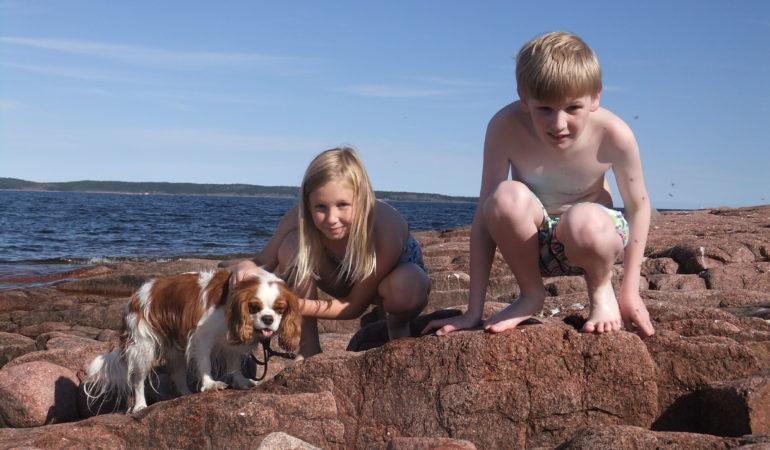 Bästa tipsen för att resa med hund i Sverige – här är hunden välkommen i sommar