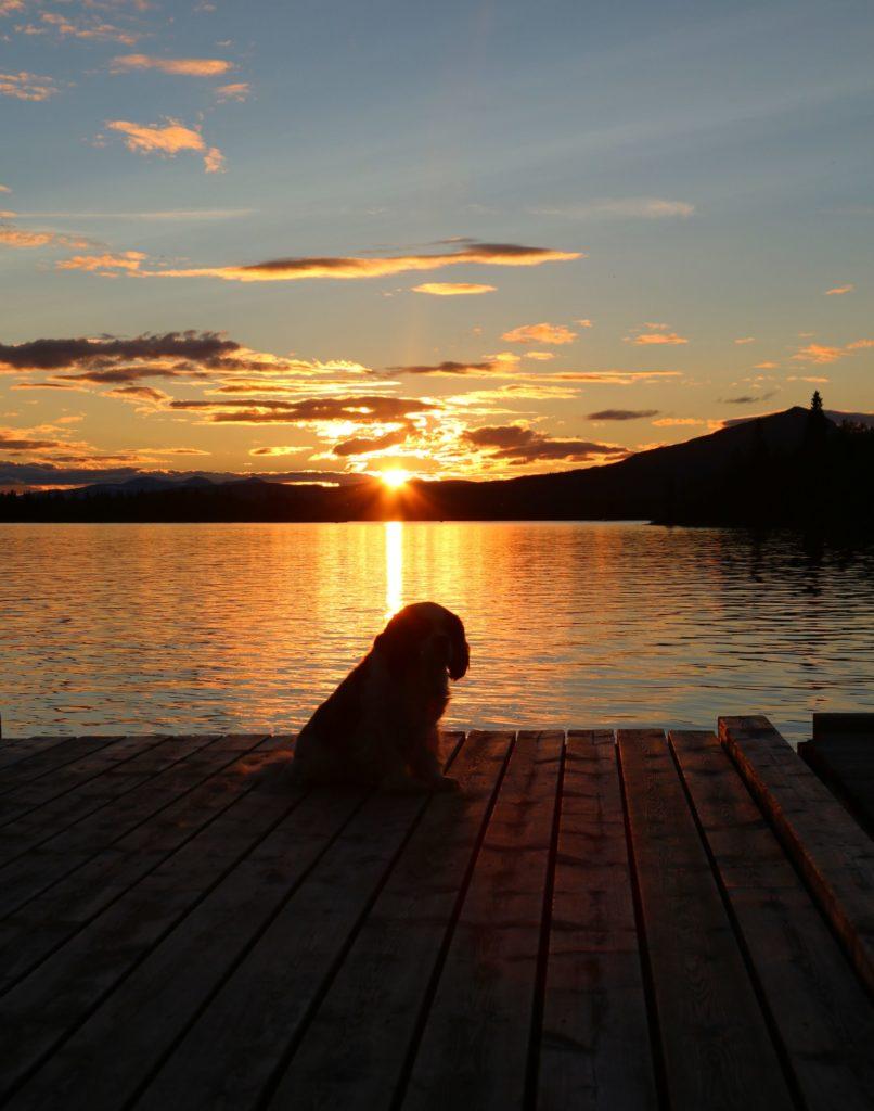 Resa med hund inom Europa