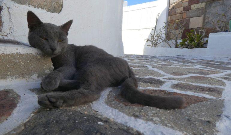 När vi adopterade en katt som (numera) heter Tage – Att mata djur på resan, hur blir det sen?
