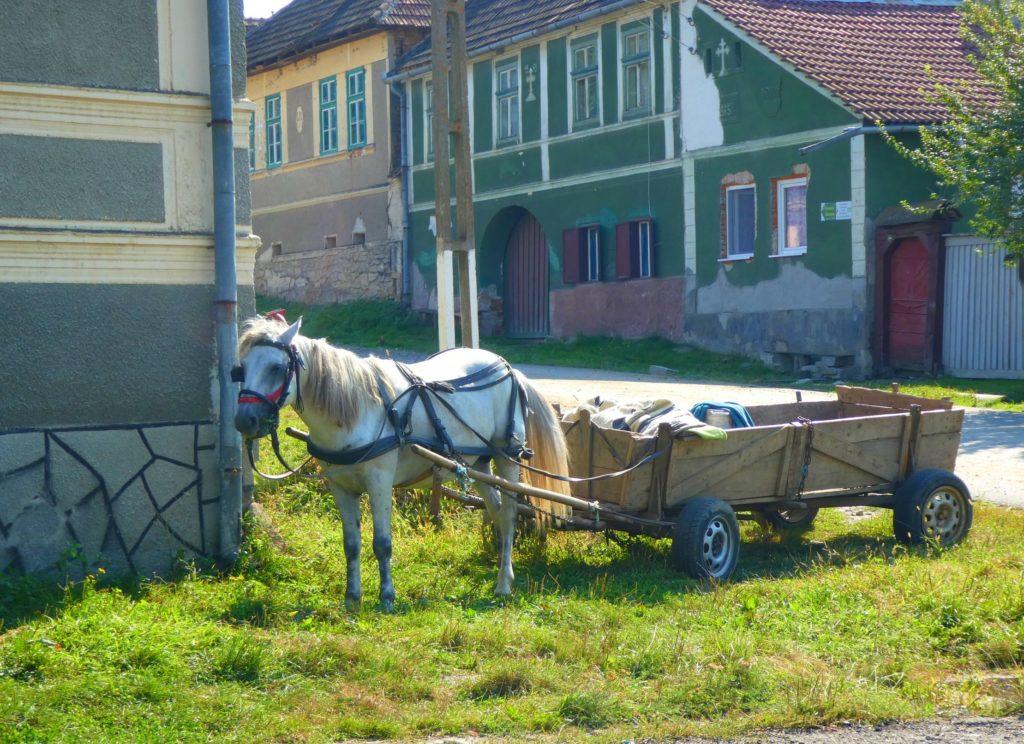 roadtrip Transsylvanien häst och vagn