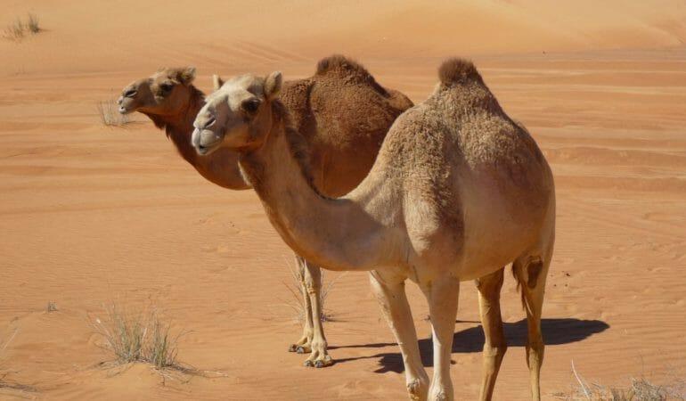 När är bästa tiden att åka till Dubai?