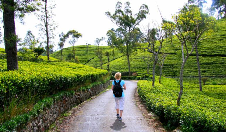 Hur det går till att hyra bil och chaufför på Sri Lanka
