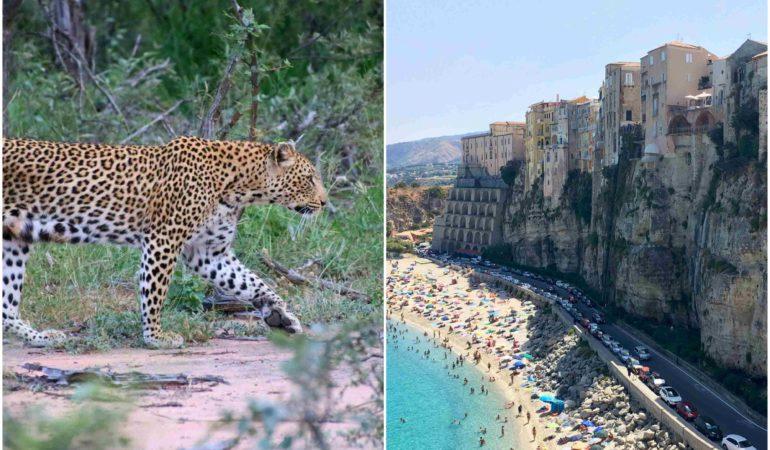 Hemma från Sydafrika och på väg igen till Tropea