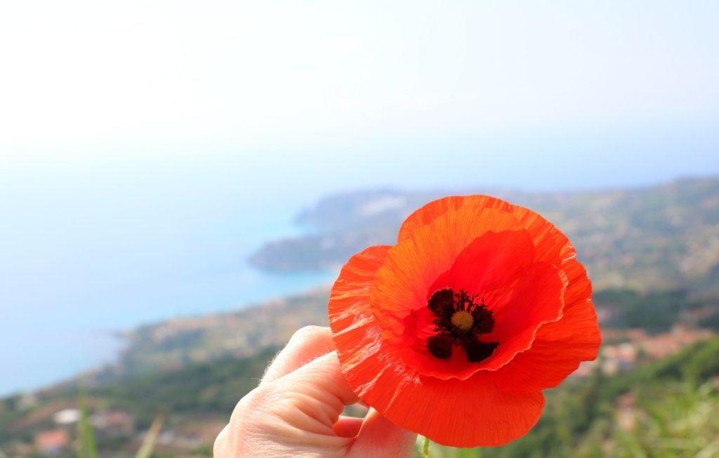 Guide till Tropea