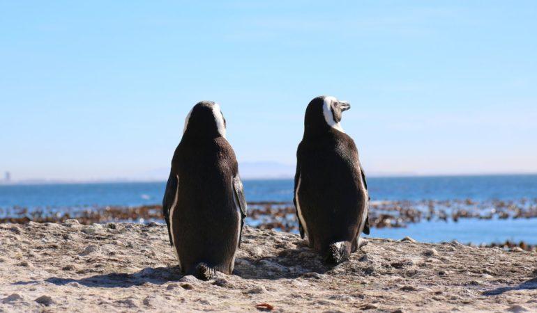 När är bästa tiden att åka till Sydafrika? – klimatguide