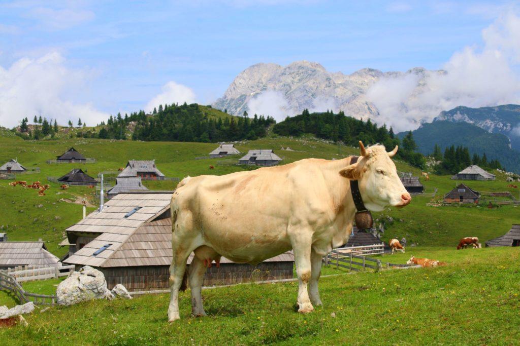 Alpko, Velika Planina och vandring i Slovenien