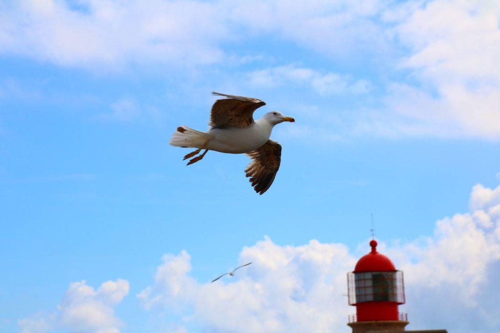 Att göra i Algarve - bästa tipsen för en aktiv semester