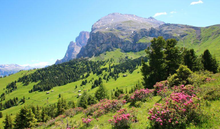 Vandring i Dolomiterna: Seiser Alm, Zallingerhytte och Sasso Piatto