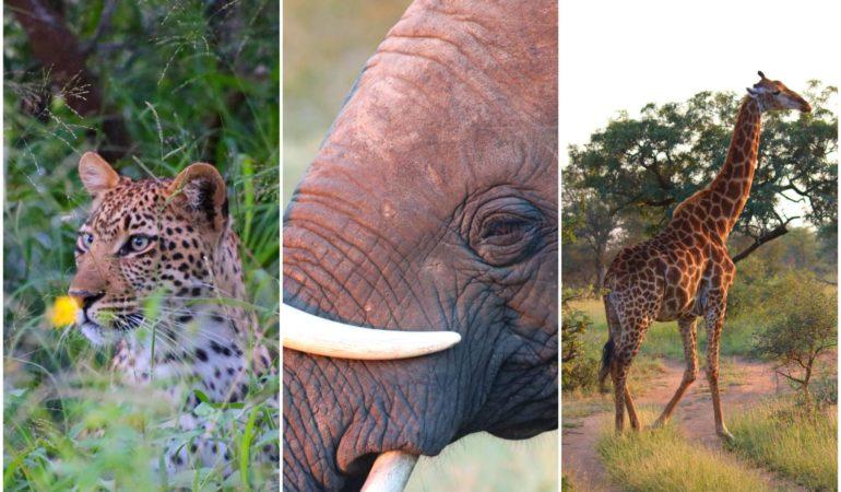 Allt du behöver veta innan du åker på safari i Afrika