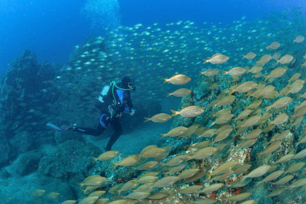 Dykning på Madeira