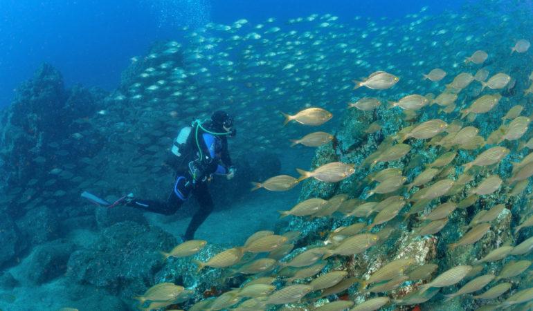 Dykning på Madeira – Christofer är tillbaka i våtdräkten igen efter 19 års uppehåll