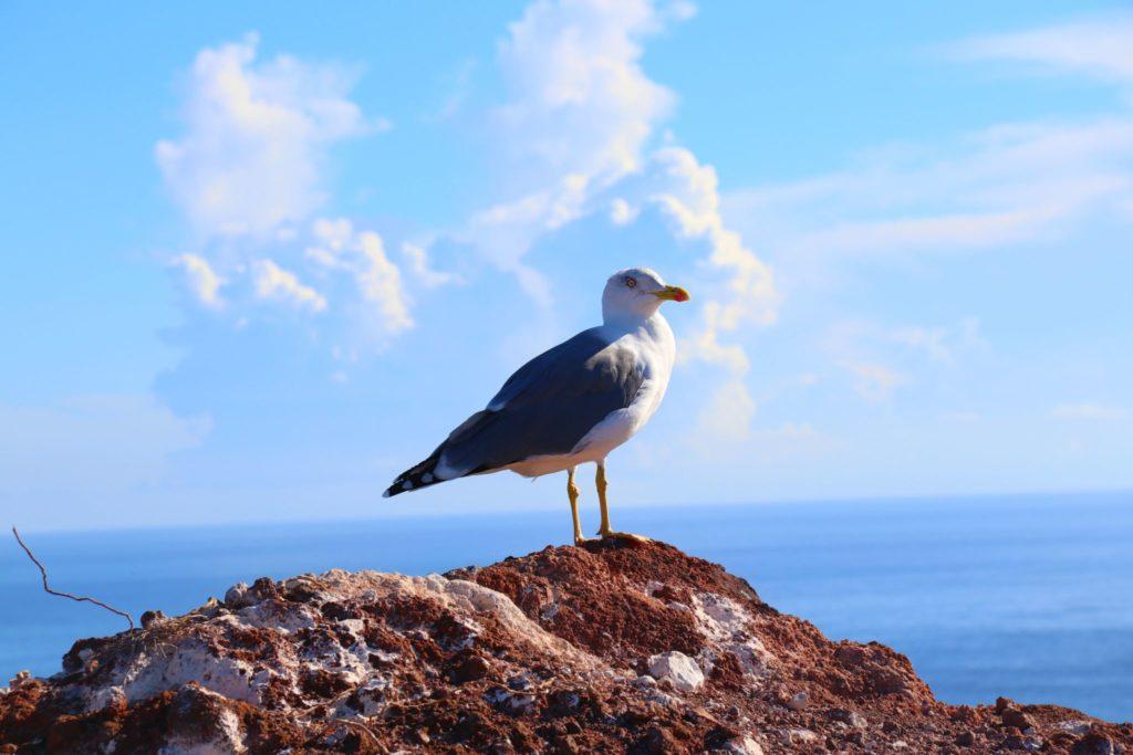 Vandring på Madeira - Ponta de Sao Lourenco