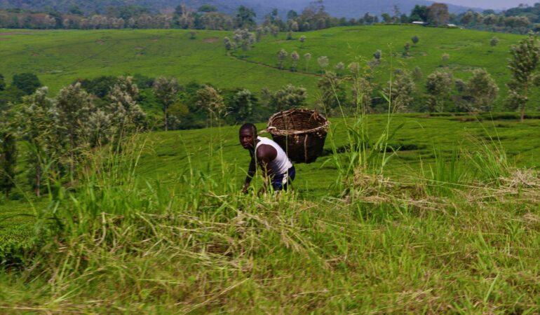 Hemma igen från Uganda