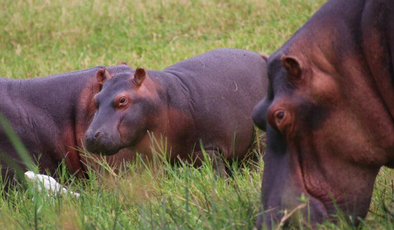 Världens 10 farligaste djur