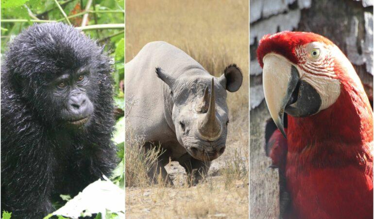 Fantastiska djurmöten på resa – det här är våra bästa