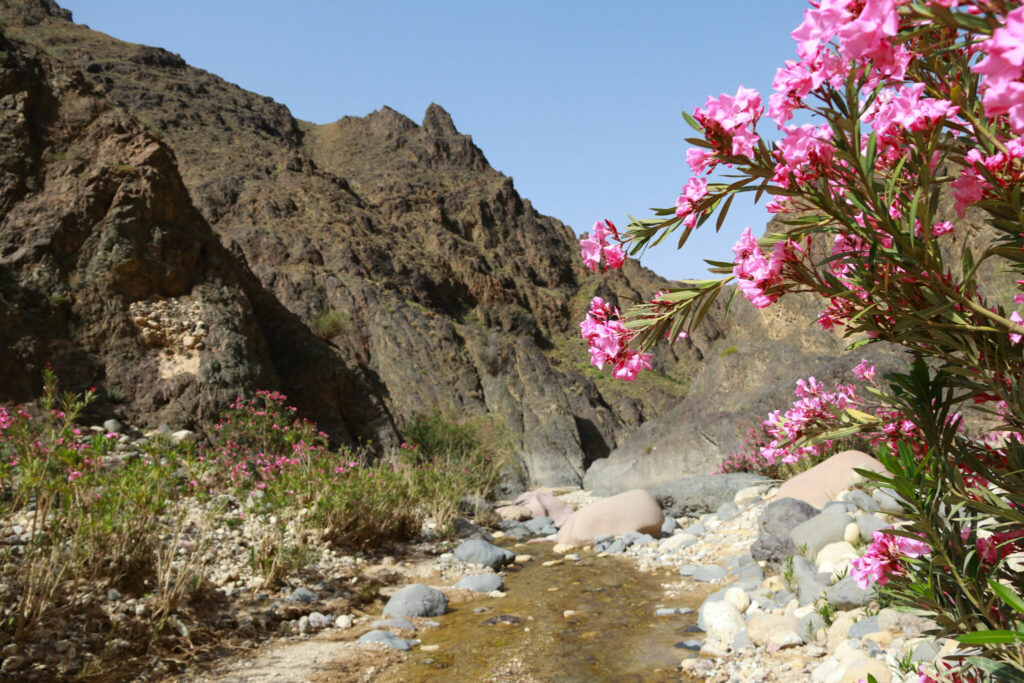 Vandring i Jordanien - Wadi Ghwayr
