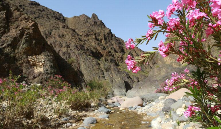 Vandring i Jordanien – med blöta fötter i Wadi Ghwayr