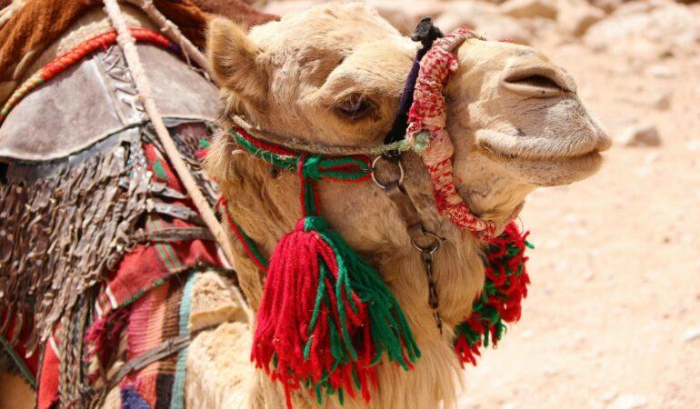 Min resa till Jordanien – resrutt och upplägg