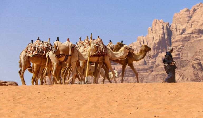 Att rida kamel i Wadi Rum – är det verkligen PK?