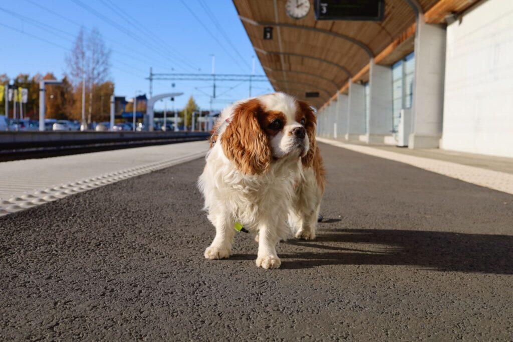 åka tåg med hund