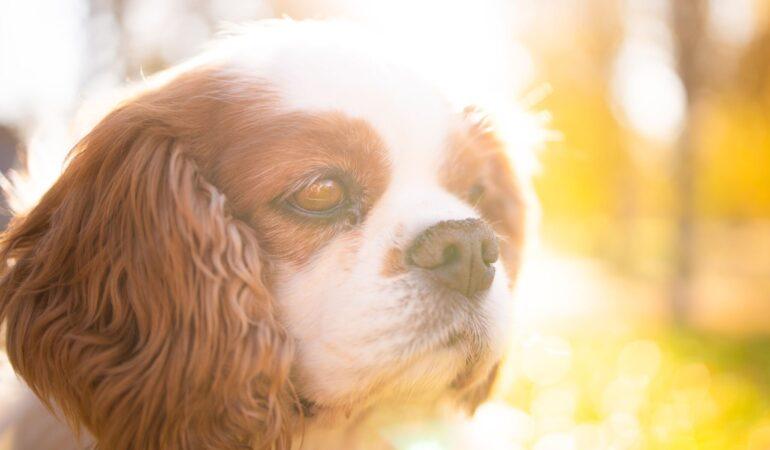 Att sakna sin hund