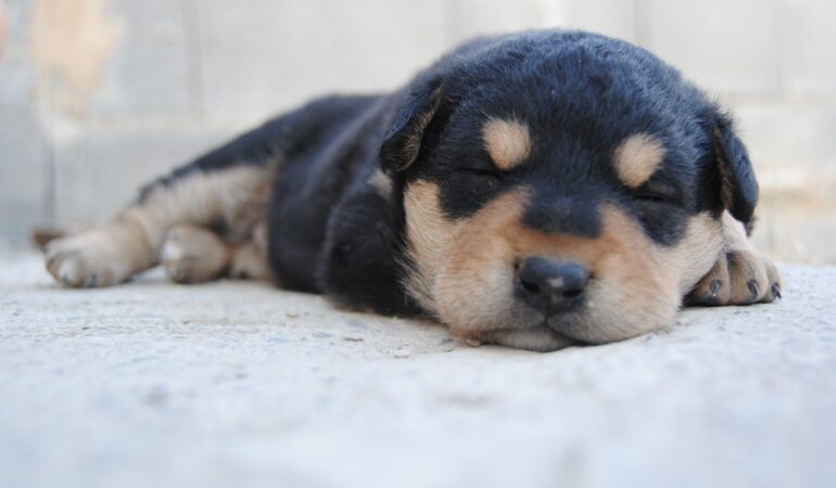Längtan efter en ny hund