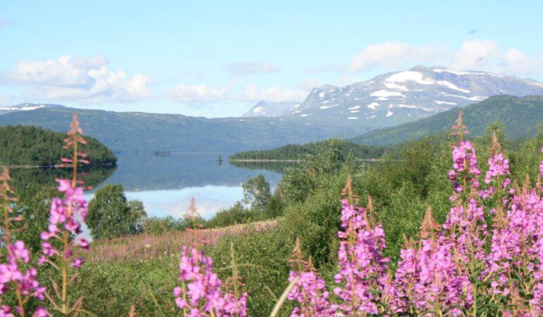 Nu har vi avbokat Lofoten, Norge – och skriver ett bittert öppet brev till nationen Norge