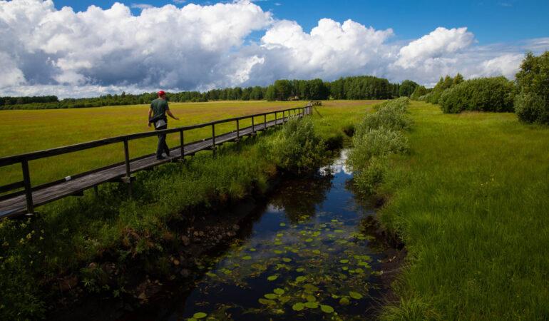 Färnebofjärdens nationalpark och Gysinge – vi reser tillbaka till min barndoms äventyrsland
