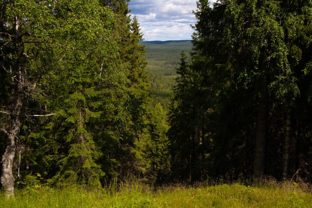 Gästriklands högsta punkt Lustigknopp