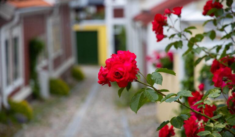 Det bästa av Gävle – en promenad genom centrala stan på 6 timmar och 17.000 steg