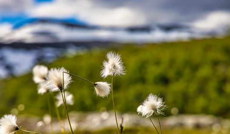 Samiskt lexikon för fjällvandring – vad betyder orterna på kartan?