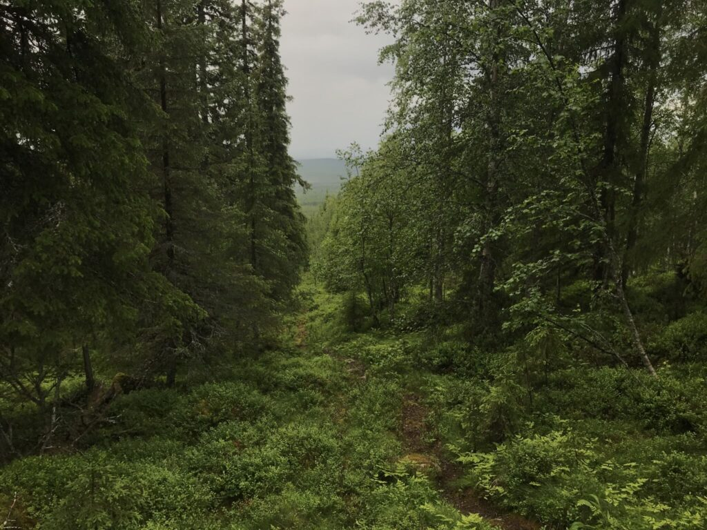 Norrbottens högsta punkt Vitberget