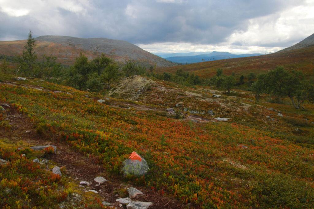 Vandring i Sonfjällets Nationalpark