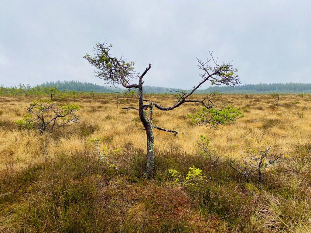 Vandring i Store Mosse nationalpark