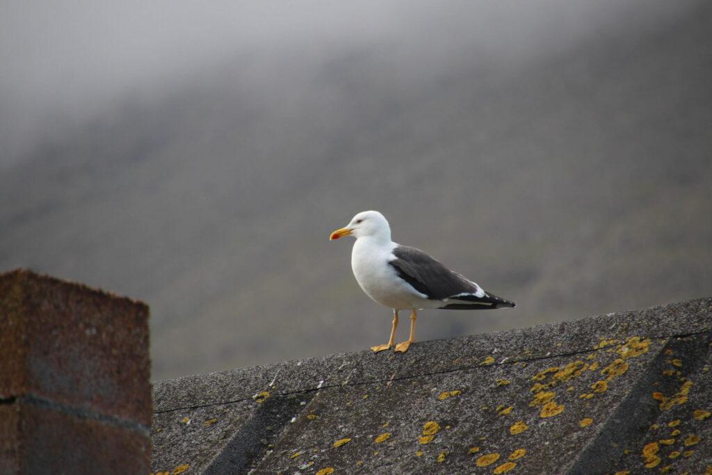roliga fakta om Färöarna